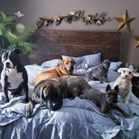 Six dogs on bed